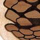 Curly Maple Pinecone Teardrop Plugs