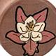 Swiss Pear Wild Pink Columbine Plugs