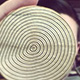 1 3/4+ Growth Rings