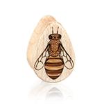 Honeybee - Teardrops