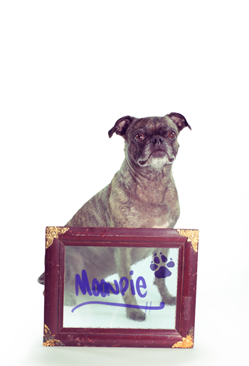 Full-Time Shop Mascot