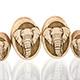 Elephant Oval Plugs
