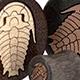 Trilobite Plugs - Bloodwood